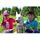 Около 46 тыс. рублей собрано на фотосессии в помощь приюту животных Бердска