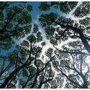 Леса в регионе станет больше