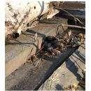 Ползающую гадюку нашли у пятиэтажки в искитимском р.п. Линёво
