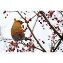 Предлагаю увлекательное занятие для родителей с детьми: изучите птиц в Бердске!
