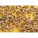 Пчёлы погибли на местных пасеках