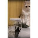 Кадр из видео - летучая мышь залетела в квартиру