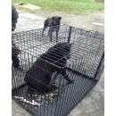 Для ловли собак в клетки применяют только еду