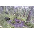 Медведь попал на камеру в заказнике