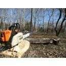 Подрядчик уберёт аварийные и сухостойные деревья вдоль дороги