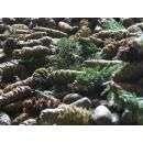 Сейчас запас семян хранится в Бердске
