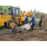 Спасатели вытащили лося из земляной ловушки в Искитиме