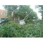 Ветки и целые деревья падали на линии электропередач