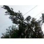 Во время урагана убило упавшим деревом женщину в Советском районе Новосибирска