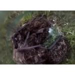 В банке находятся шесть из 11 летучих мышей, залетевшие 30 июля в квартиру бердчанки
