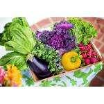 Садоводов Бердска приглашают на  «Праздник Урожая»