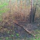 В Бердске у БЭМЗа поджигают лес, чтобы вырубать деревья (фото)