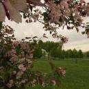 Вы давно были в парке Бердска?