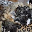 Очаровательные котята