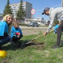 В парке Победы Бердска посадили аллею из 70 сиреней