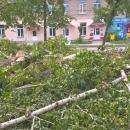 Снова рубят деревья в Бердске
