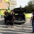 Трое живодеров в Бердске отлавливали собаку жестоким способом. Собака была вся в крови!