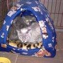 Операция по спасению запертых кошек в Бердске успешно завершена