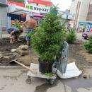 Вместо сквера у «Меркурия» в Бердске сделали клумбу и высадили на нее семь ёлочек