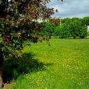 В парке Бердска  растет 1600 деревьев и 50 кустарников