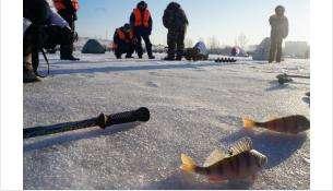 Неокрепший лёд не пугает рыбаков Бердска