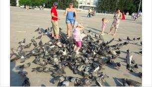 В Бердске полчища голубей живут на площади Горького