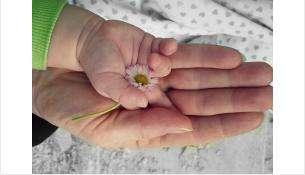 В Бердске стали меньше рожать