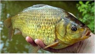 Введен запрет на рыбалку в Новосибирской области