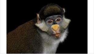 Бердск! Встречай! До 9 июня выставка - более 60 видов экзотических животных