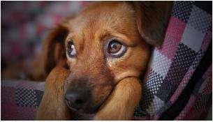 Несчастное животное подверглось пыткам
