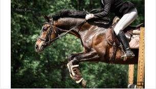 В Академгородке пройдут юбилейные 15-е конные игры на приз мэра Новосибирска