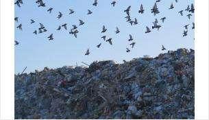 Птицы создавали угрозу безопасности воздушного движения