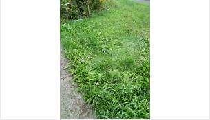 Ребенок упал с балкона на траву
