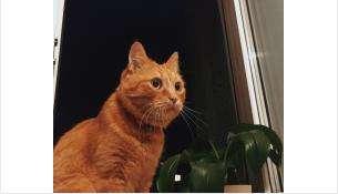Кот Мотя погиб в августе этого года