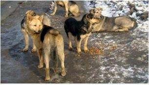 В Бердске создадут движение зоозащитников