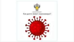 Как долго живет коронавирус COVID-19 вне организма человека и от чего погибает?