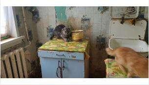 Кошачий концлагерь – 47 голодных кошек зоозащита отобрала у жительницы Бердска