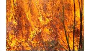 Огонь может перекинуться на леса