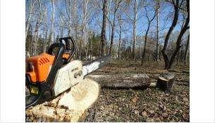 Спилят только аварийные деревья