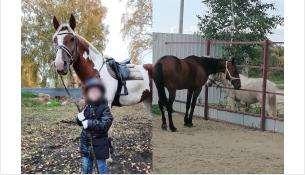 Умка, Зорька и Проталинка катают посетителей конного клуба