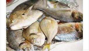 Браконьеры выловили плавной сетью 209 лещей из Бердского залива