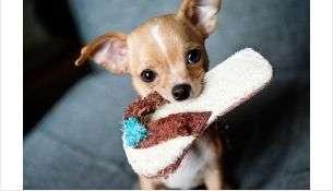 Госдума приняла законопроект о запрете изъятия домашних животных за долги