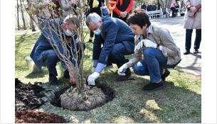 Губернатор Андрей Травников вместе с новосибирцами принял участие в акции «Сад памяти»