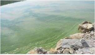 Цветение воды происходит каждый ежегодно
