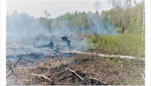На территории Бердск лесных пожаров нет