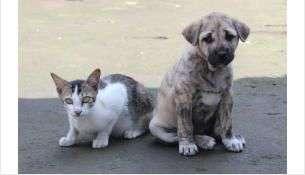 Требования к содержанию домашних животных