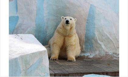 Фото с вчерашней прогулки по зоопарку