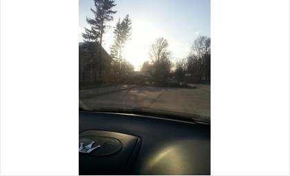 Елка упала от ветра у Следственного комитета в Бердске