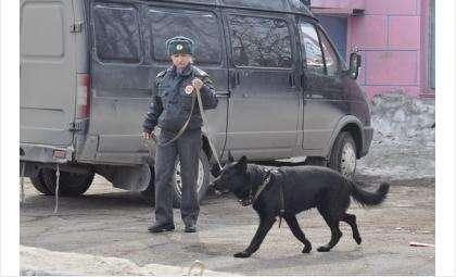 Пес Райс работает в отделе МВД России по Бердску