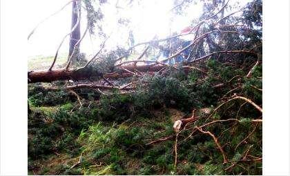На берегу у базы отдыха Чайка в Бердске во время урагана падали вековые сосны